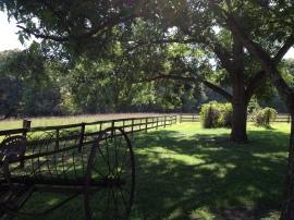 Farmhaven Summer 2014_7