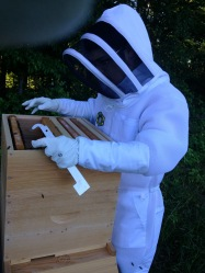 JC does a hive inspection of our honey bees.
