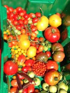 A beautiful morning harvest the third week of June.