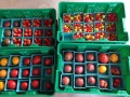 Heirloom tomato assortment packed for market