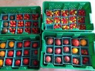 Heirloom tomato assortment packed for market