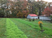 Cover Crops of Hairy Vetch and Winter Rye in Market Garden