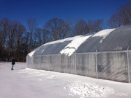 Farmer Linda watches the snow slide off the high tunnel