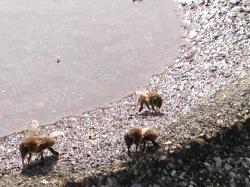 Ladies collecting water to make honey