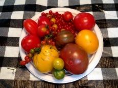Variety of heirloom tomatoes